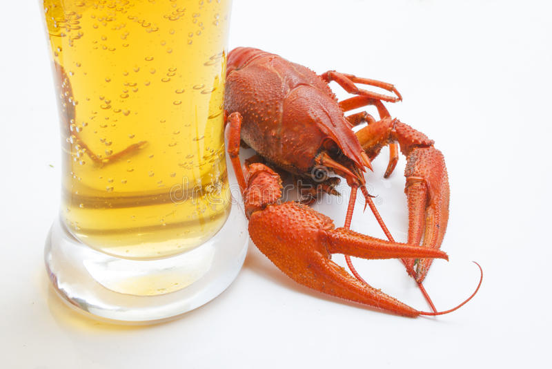 A lagosta vermelha com um vidro da cerveja imagens de stock royalty free