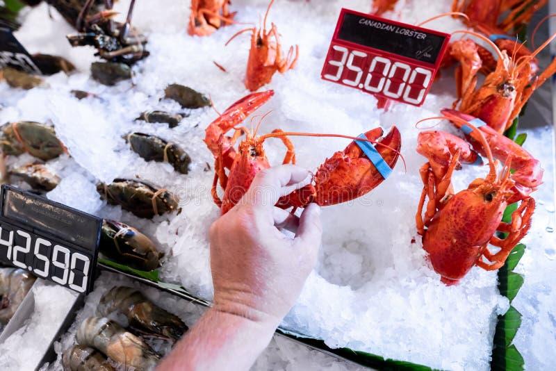 Lagostas frescas no mercado do marisco Loja da lagosta Lagosta do marisco cru fotos de stock royalty free