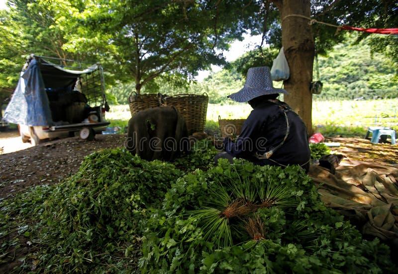 Lagra och grönsaklantbruk för slag ut royaltyfria bilder