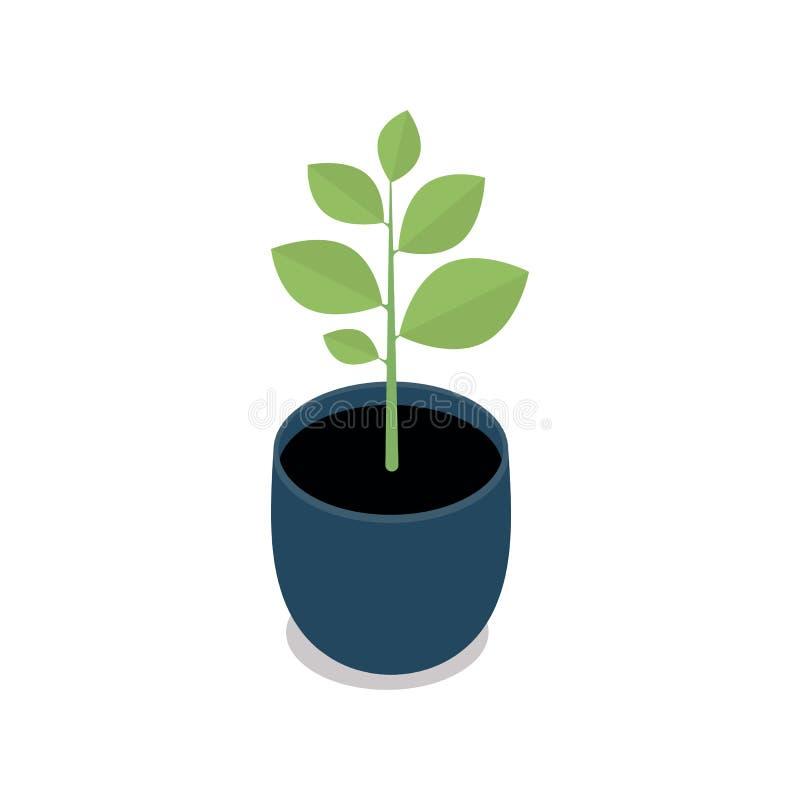 Lagt in inomhus, kontors- och husväxt blomkruka 3d med plattan Isometrisk vektorillustration vektor illustrationer