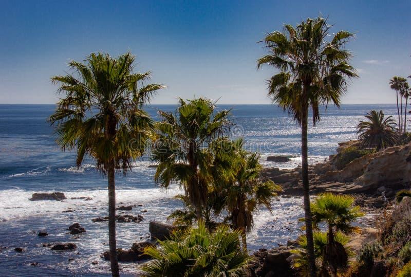 Пальмы в пляже Laguna, Калифорния стоковые изображения