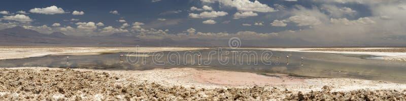 Laguna Altiplanica images libres de droits