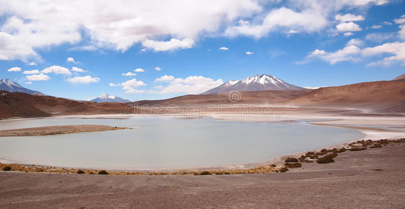 Laguna at the altiplano in Bolivia royalty free stock photos