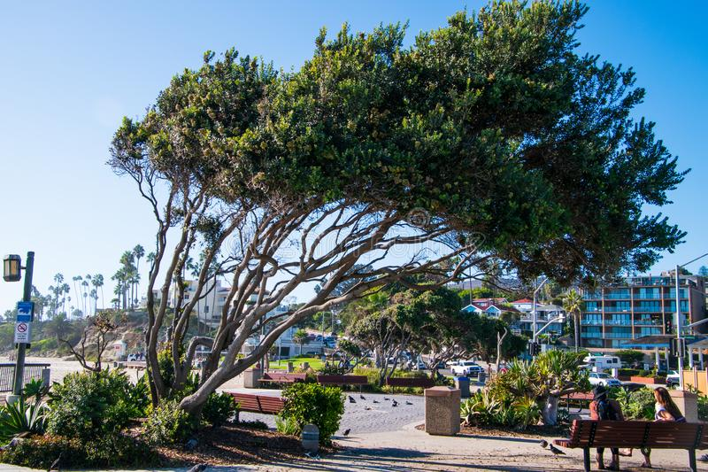 Small park with a young couple sitting on a bench under a tilted tree. Laguna Beach, California - October 9, 2018: Small park with a young couple sitting on a royalty free stock images