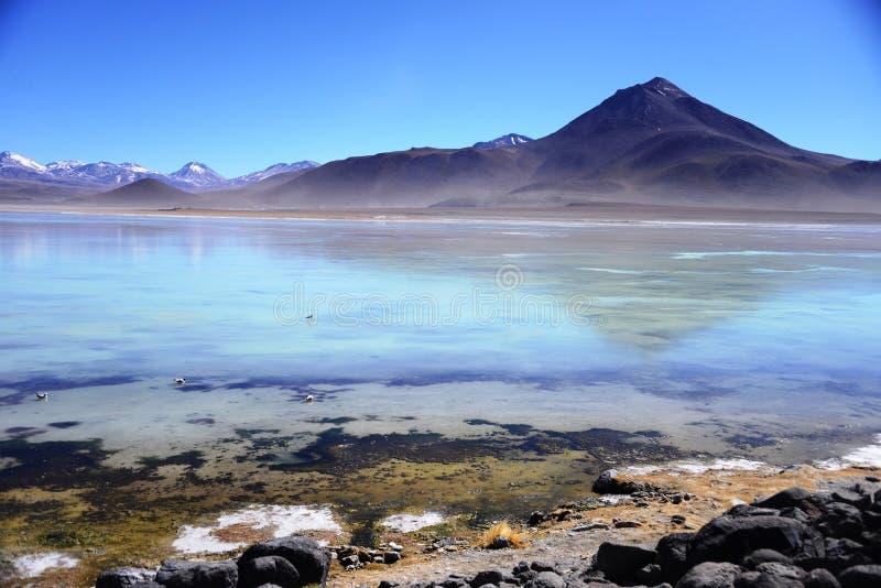 Laguna Blanca, Bolivië stock fotografie
