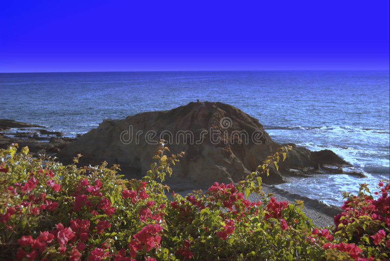 Laguna Bloemen bij het Strand stock foto