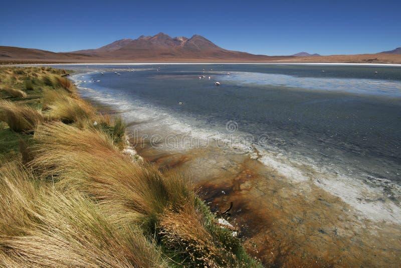 Laguna Canapa, Andes bolivianos imagem de stock