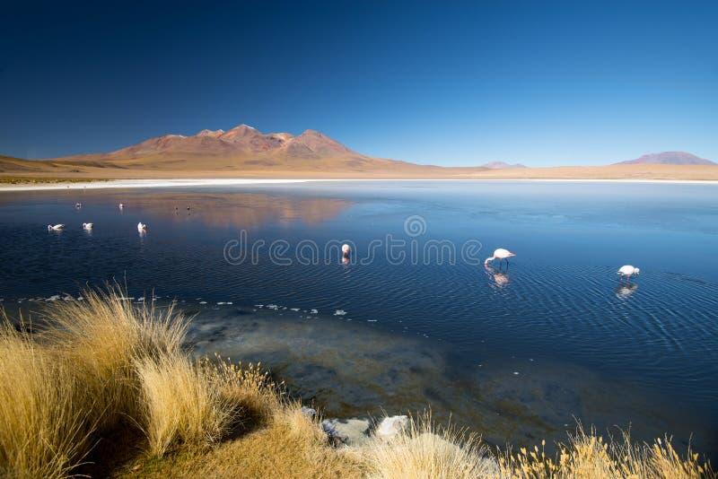 Laguna Canapa con el flamenco, Bolivia - Altiplano 3d ilustraci?n tridimensional muy hermosa, figura imagen de archivo libre de regalías