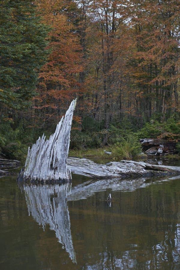 Laguna Captren nel parco nazionale di Conguillio, Cile del sud fotografia stock