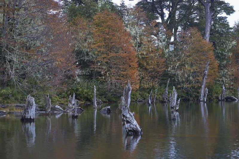 Laguna Captren nel parco nazionale di Conguillio, Cile del sud fotografia stock libera da diritti