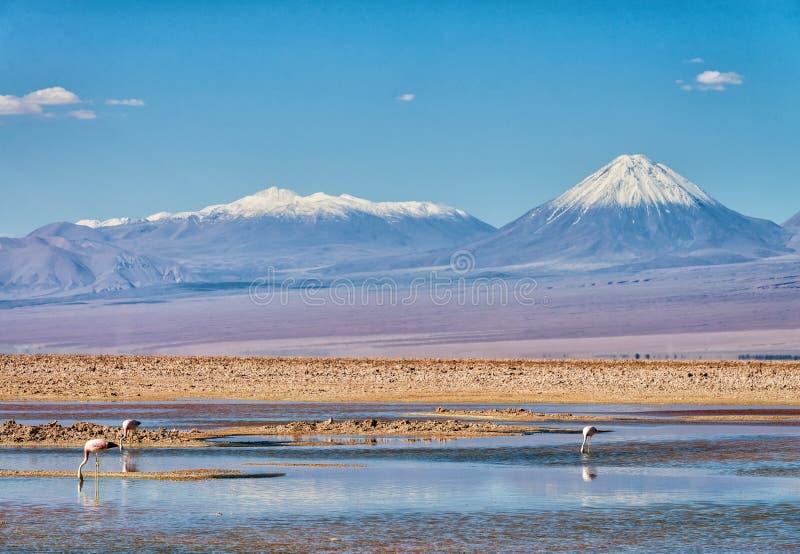 Laguna Chaxa über Atacama-Wüste stockfotografie