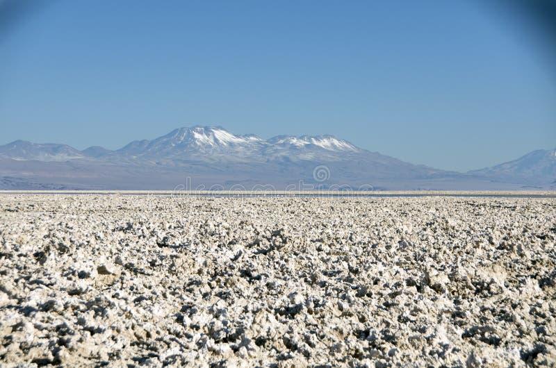 Laguna Chaxa, Chili photo stock