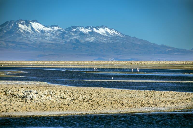 Laguna Chaxa, o Chile foto de stock royalty free