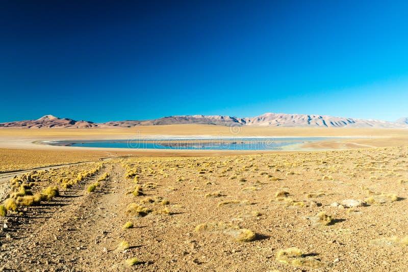 Laguna Collpa lake. On bolivian Altiplano stock photography
