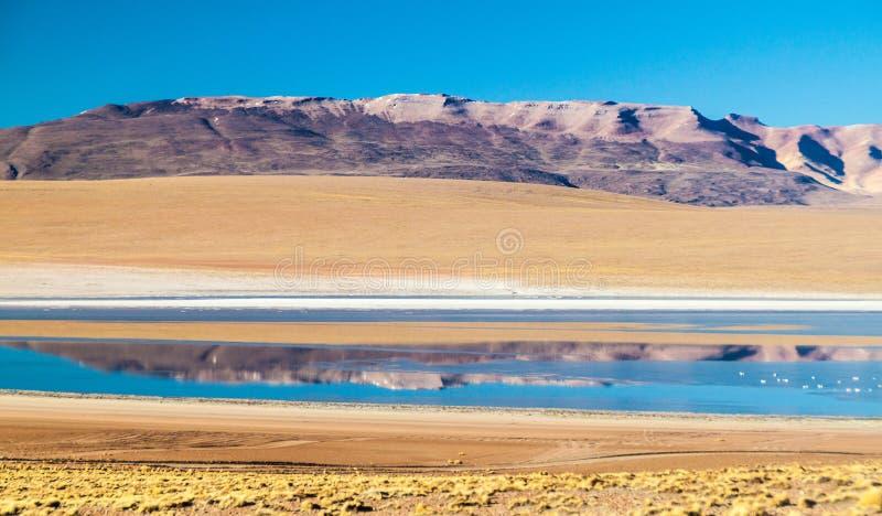 Laguna Collpa lake. On bolivian Altiplano stock photos