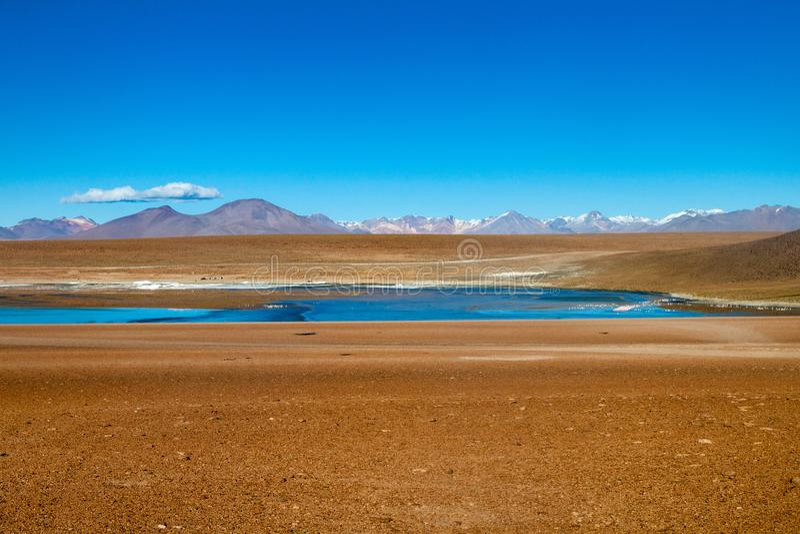 Laguna Collpa lake. On bolivian Altiplano royalty free stock photography