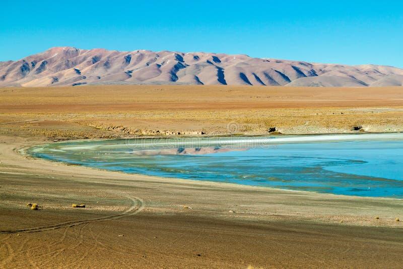 Laguna Collpa lake. On bolivian Altiplano stock image