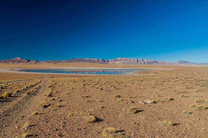 Laguna Collpa lake. On bolivian Altiplano royalty free stock photos