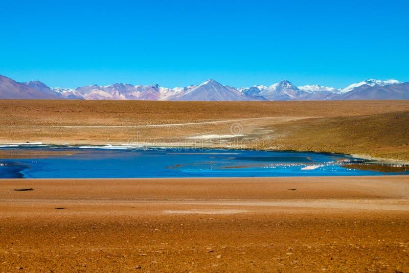 Laguna Collpa lake. On bolivian Altiplano royalty free stock images