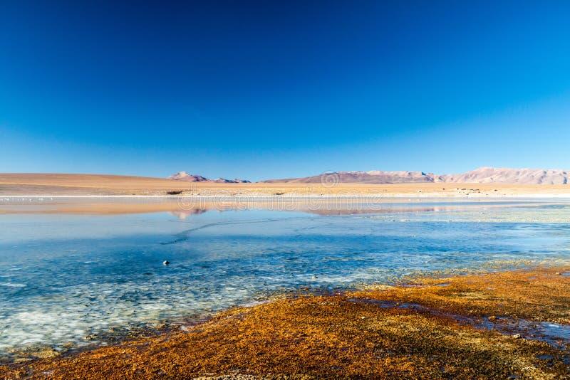 Laguna Collpa lake in Reserva Nacional de Fauna Andina Eduardo Avaroa protected area, Boliv. Ia stock image
