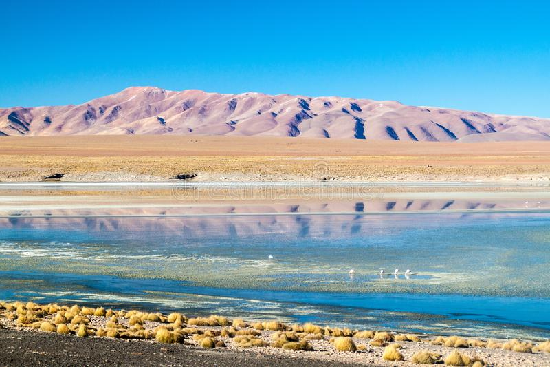 Laguna Collpa lake. In Reserva Nacional de Fauna Andina Eduardo Avaroa protected area, Bolivia royalty free stock images
