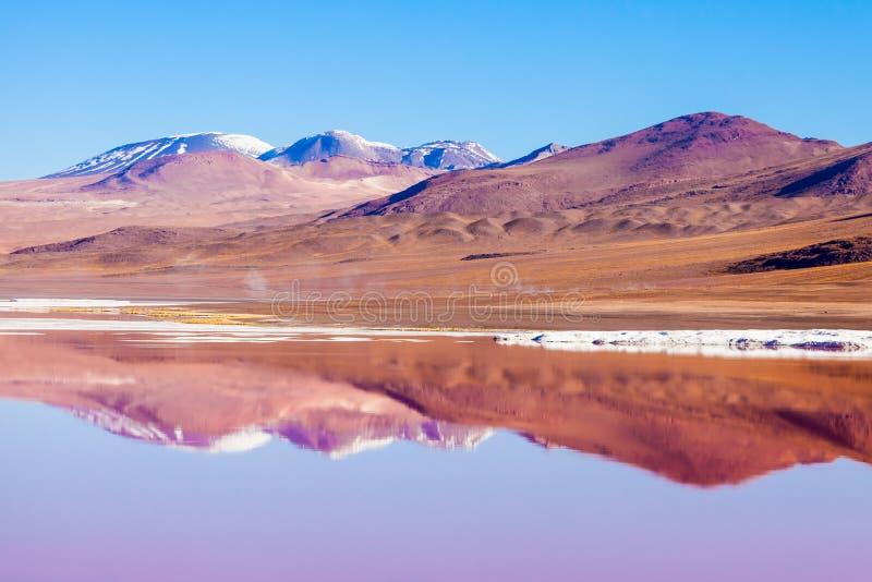 Laguna Colorada湖 免版税库存图片