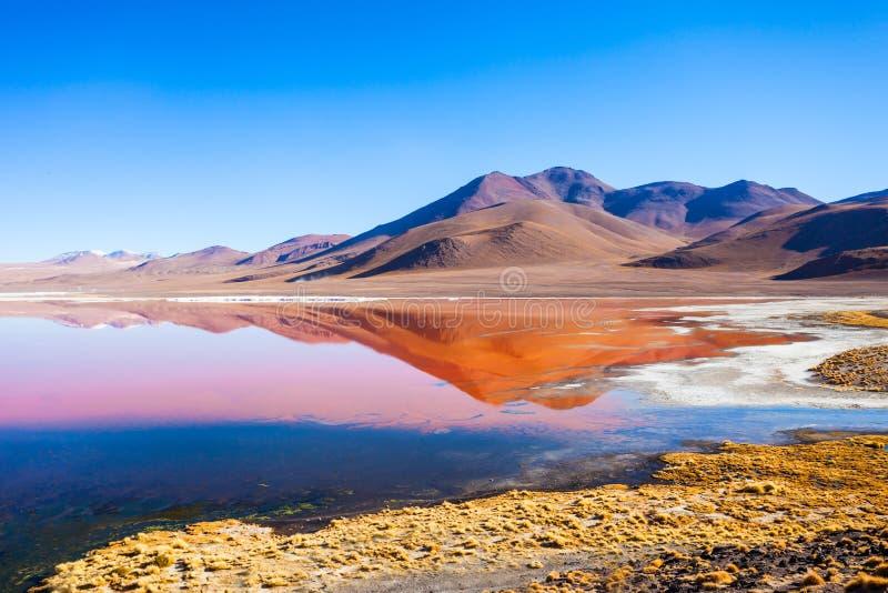 Laguna Colorada湖 库存照片