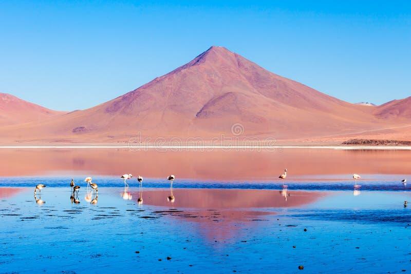Laguna Colorada湖 免版税图库摄影