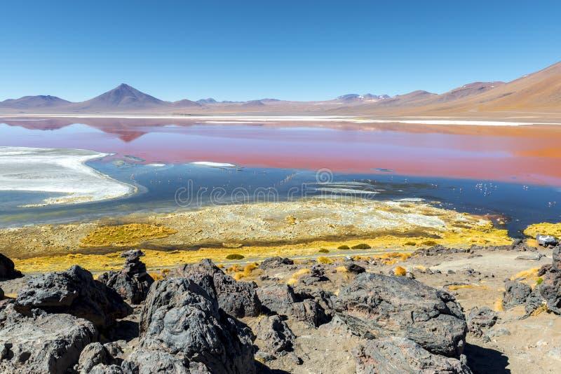 Laguna Colorada σε Uyuni, Βολιβία στοκ εικόνες