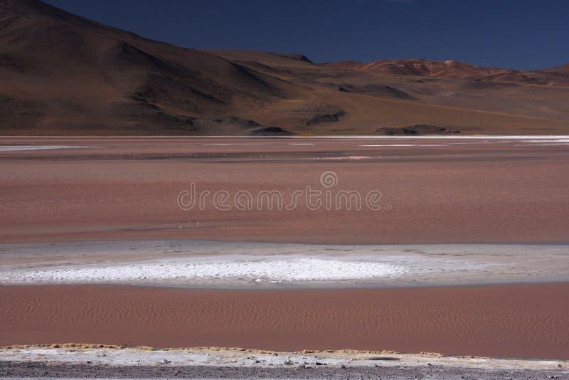 Laguna Colorada image stock