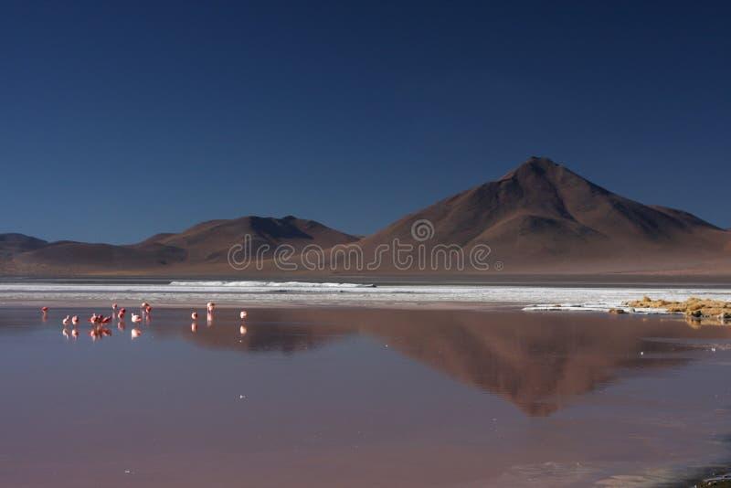 Laguna Colorada photo stock