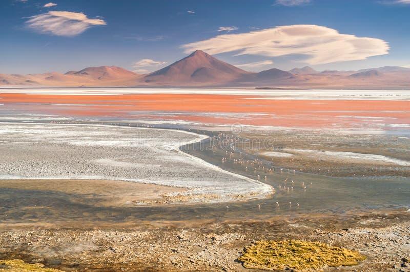 Laguna Colorada images libres de droits