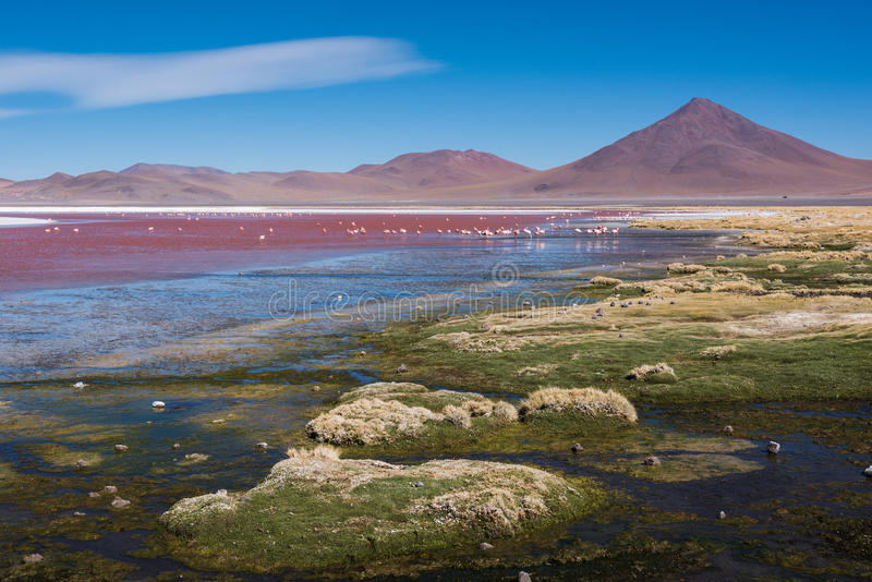 Laguna colorada obrazy royalty free