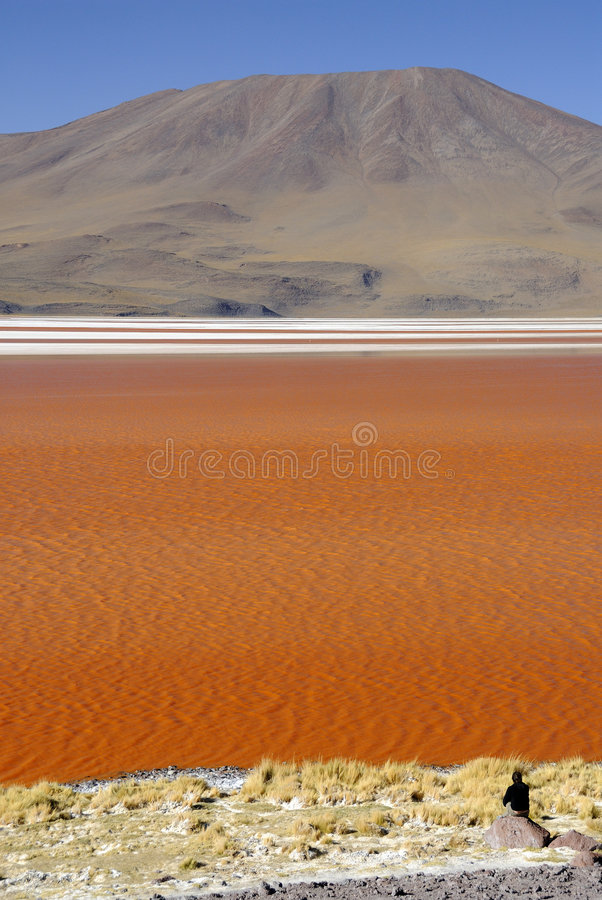 Free Laguna Colorada, Altiplano, Bolivian Andes Royalty Free Stock Image - 7714146