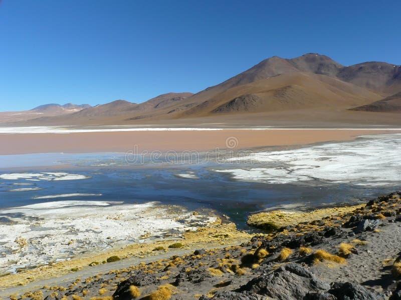 Laguna Colorada, Altiplano, Bolivie photos libres de droits