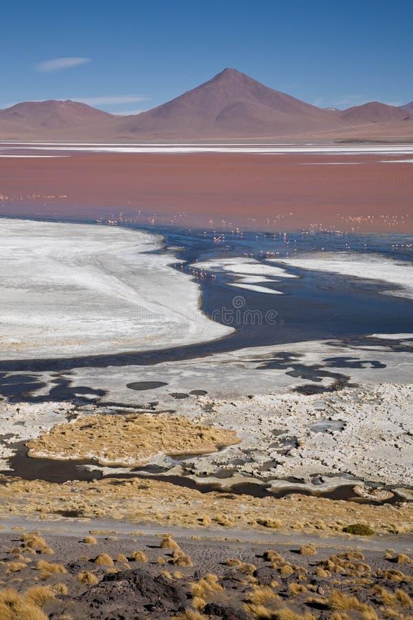 Laguna Colorada, Bolívia foto de stock