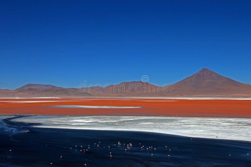 Laguna Colorada Bolivia foto de archivo