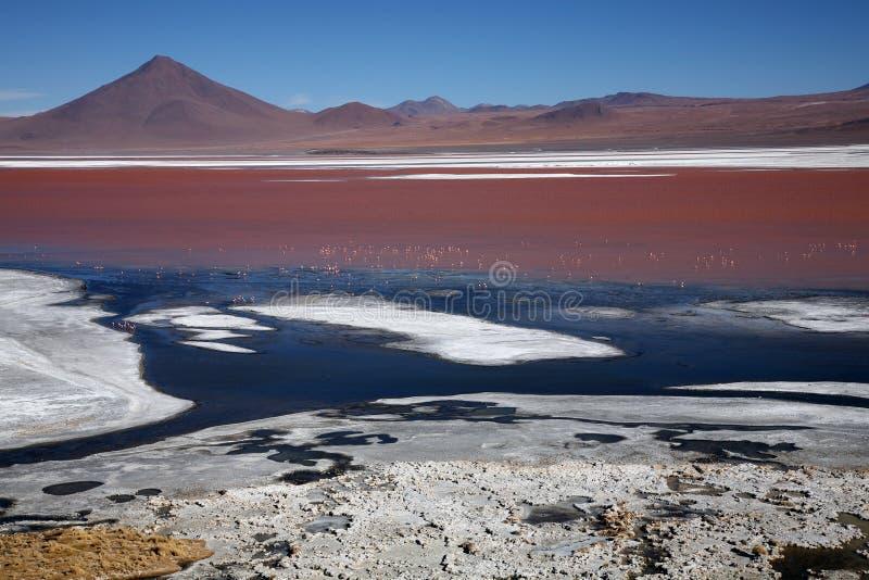 Laguna Colorada, Bolivie image stock