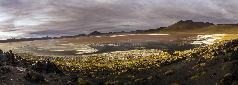 Laguna Colorada in Cordillera de Lipez, Bolivia royalty free stock photography
