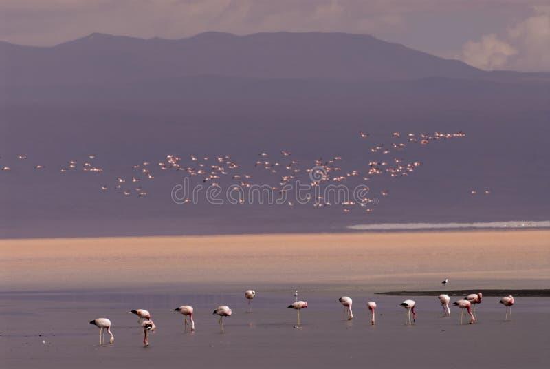 Laguna Colorada em Bolívia foto de stock royalty free