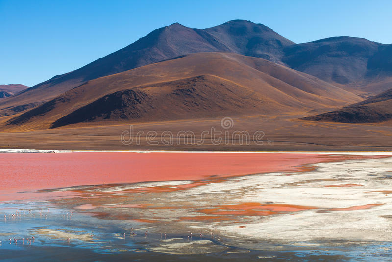 Laguna Colorada en Bolivie photo stock