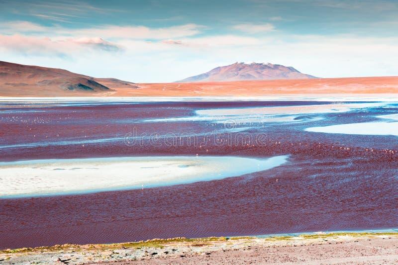 Laguna Colorada met roze flamingo's op Altiplano-plateau, Bolivië stock foto