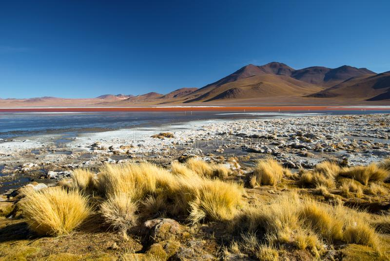 Laguna Colorada - rode waterlagune bolivi? 3d zeer mooie driedimensionele illustratie, cijfer royalty-vrije stock fotografie