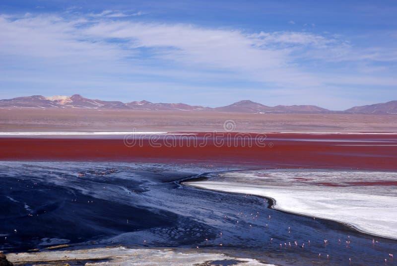 Laguna Colorado stock photography