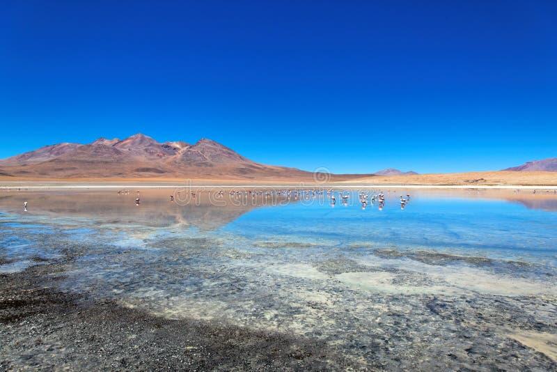 Laguna de Canapa, Bolívia foto de stock