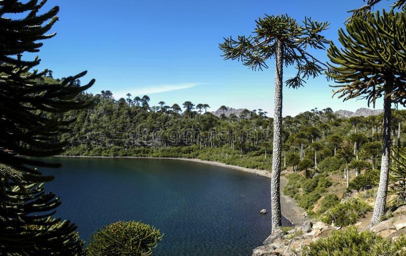 Laguna de la mula, bio bio Chile imágenes de archivo libres de regalías