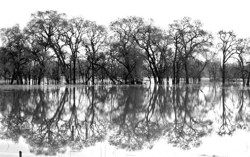 Laguna De Santa Rosa Trees Black and White royalty free stock image