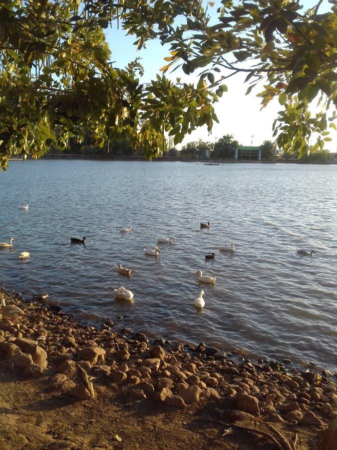 Laguna Del Nainari, cd obregon sonora fotografia royalty free