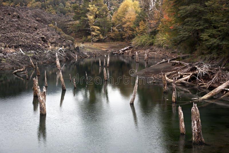 Laguna di Arcoiris dal parco nazionale di Conguillio immagine stock libera da diritti