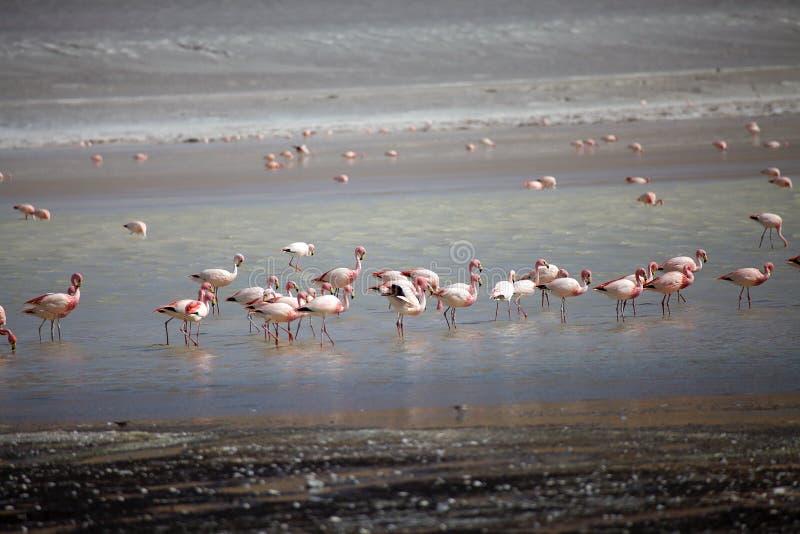 Laguna Grande in de provincie Catamarca in Puna de Atacama, Argentinië stock foto's